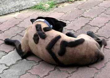 小黑-趣味照片-狗狗